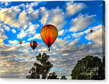 Hot Air Balloons Over Trees Canvas Print by Robert Bales