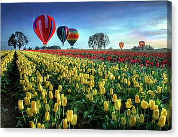 Hot Air Balloon Canvas Print - Hot Air Balloons Over Tulip Field by William Lee