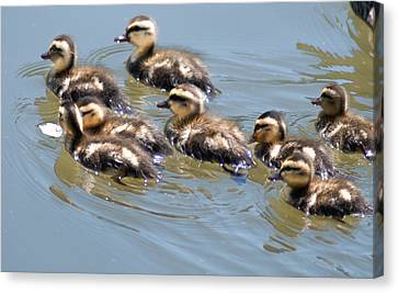 Hot Chicks Out For A Swim Canvas Print by Optical Playground By MP Ray