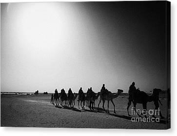 hot desert sun beating down on camel train in the sahara desert at Douz Tunisia Canvas Print by Joe Fox