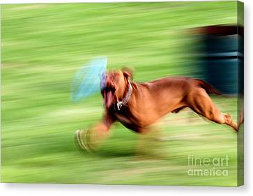 Hot Dog Canvas Print by Arie Arik Chen