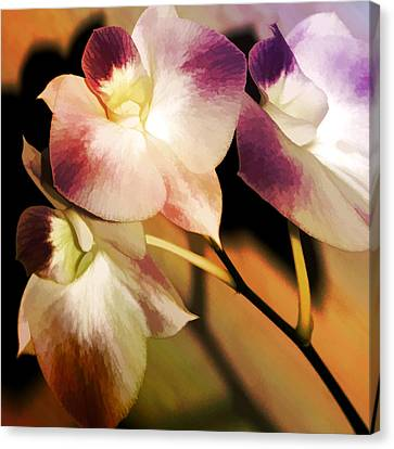 Canvas Print featuring the photograph Hot Orchid Nights by Holly Kempe