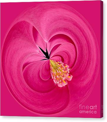 Close Focus Floral Canvas Print - Hot Pink And Round by Anne Gilbert