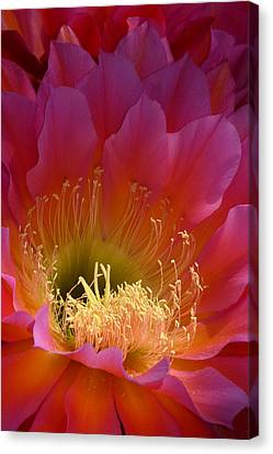 Hot Pink Beauty Canvas Print