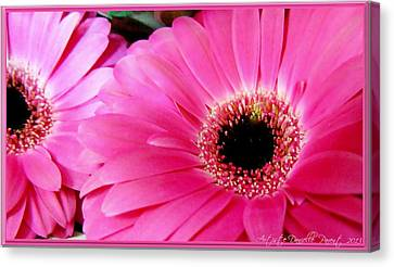 Hot Pink Gerber Daisies Macro Canvas Print by Danielle  Parent