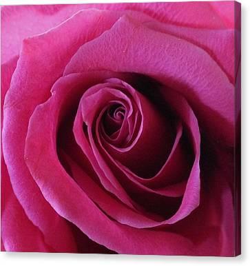 Hot Pink II Canvas Print by Anna Villarreal Garbis