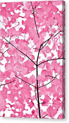 Hot Pink Leaves Melody Canvas Print by Jennie Marie Schell