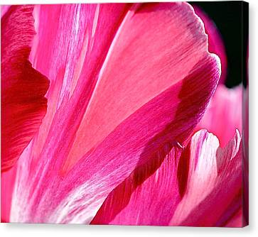White Flower Canvas Print - Hot Pink by Rona Black