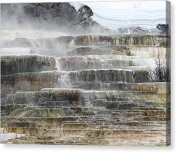 Mammoth Hot Springs Canvas Print by Carl Moore