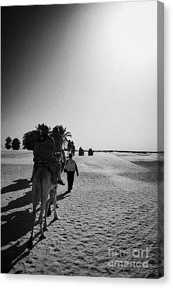 hot sun beating down on tourists taking a camel ride into the sahara desert at Douz Tunisia Canvas Print by Joe Fox