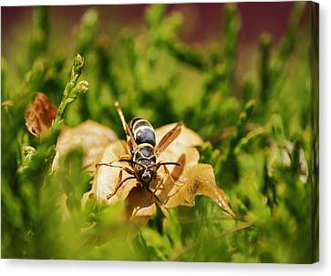 Canvas Print featuring the photograph Hot Wasp... by Al Fritz
