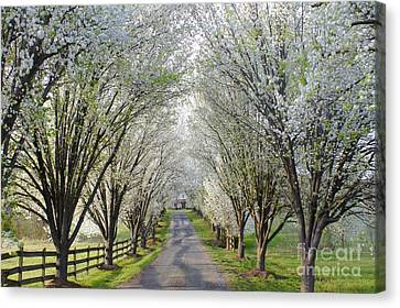 House At The End Of Pear Tree Lane Canvas Print by Benanne Stiens