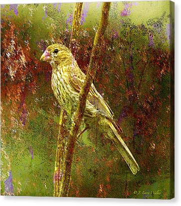 House Finch From Another World Canvas Print by J Larry Walker