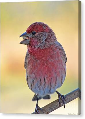 House Finch II Canvas Print by Debbie Portwood