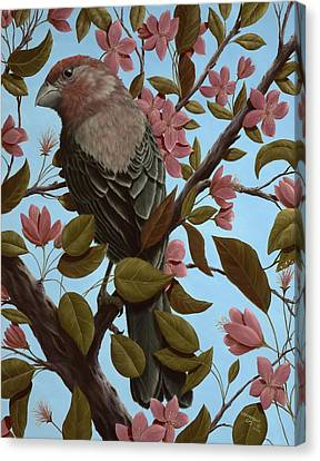 Finch Canvas Print - House Finch by Rick Bainbridge