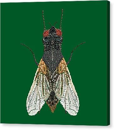 House Fly In Green Canvas Print by R  Allen Swezey