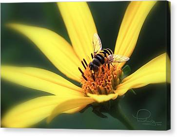 Canvas Print featuring the photograph Hover Fly On Flower by Ludwig Keck