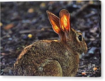 How Bout Them Ears Canvas Print by Dan Friend