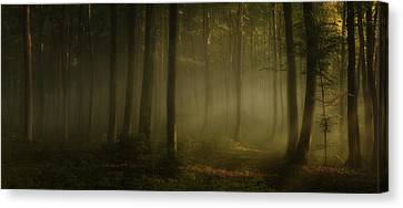 How Can Words Express The Feel Of Sunlight In The Morning Canvas Print by Norbert Maier