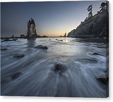 Botanical Beach Canvas Print - How I See It. by Jon Glaser