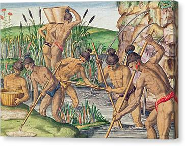 How The Indians Collect Gold From The Streams Canvas Print by Jacques Le Moyne