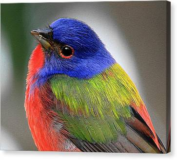 Hows This For Color Canvas Print