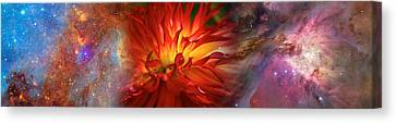 Hubble Galaxy With Red Chrysanthemums Canvas Print by Panoramic Images