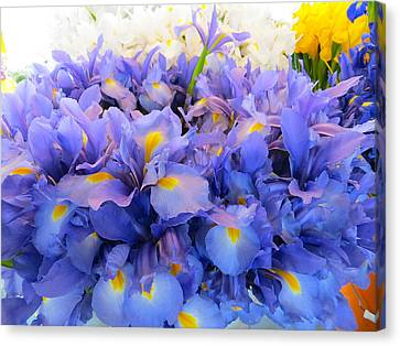 Huddling Iris Canvas Print