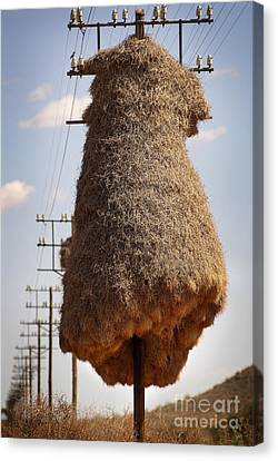 Huge Birds Nest On Pole Canvas Print
