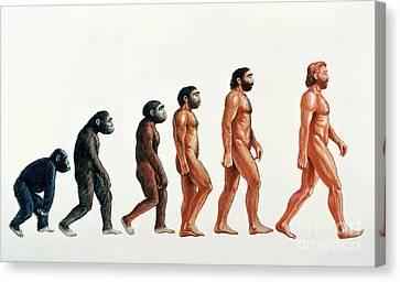 Human Evolution Canvas Print by David Gifford