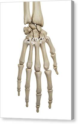 Human Hand Ligaments Canvas Print by Sciepro