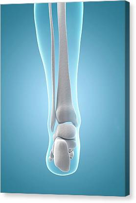 Human Heel Bones Canvas Print by Sebastian Kaulitzki