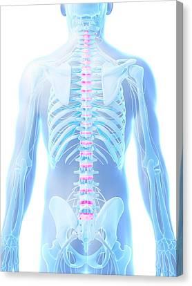 Disc Canvas Print - Human Spinal Discs by Sebastian Kaulitzki