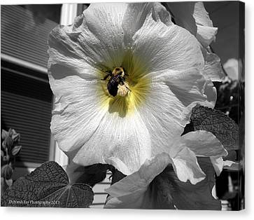 Humble Bumblebee Canvas Print by Deborah Fay