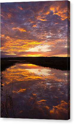 Humbled Canvas Print by Benjamin Williamson