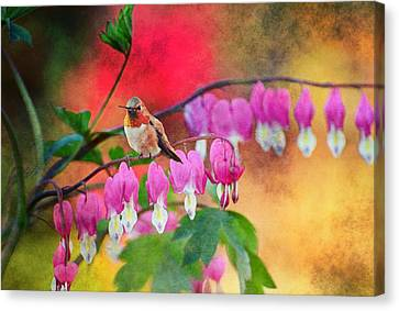 Hummer With Heart Canvas Print by Lynn Bauer