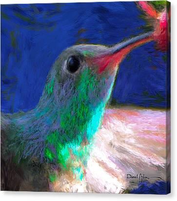Da197 Hummerbird Closeup By Daniel Adams Canvas Print by Daniel  Adams