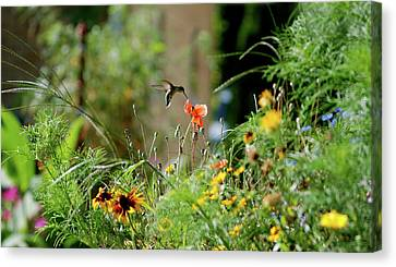 Canvas Print featuring the photograph Humming Bird by Thomas Woolworth