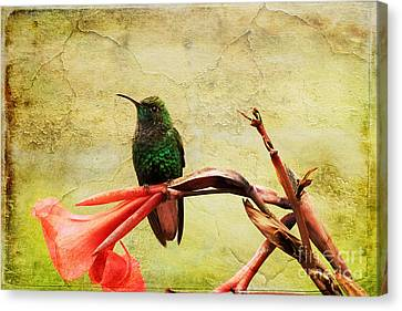 Canvas Print featuring the photograph Hummingbird 1 by Teresa Zieba