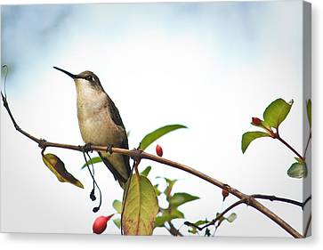 Canvas Print featuring the photograph Hummingbird 2 by Tammy Schneider