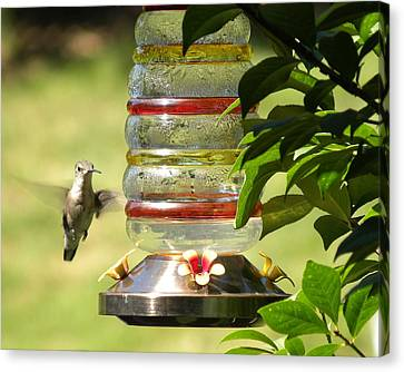 Canvas Print featuring the photograph Hummingbird - 2 by Teresa Schomig