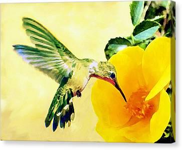 Hummingbird And California Poppy Canvas Print by Bob and Nadine Johnston