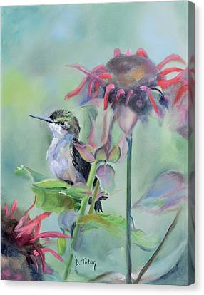 Hummingbird And Coneflowers Canvas Print