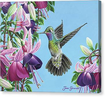 Hummingbird And Fuchsias Canvas Print