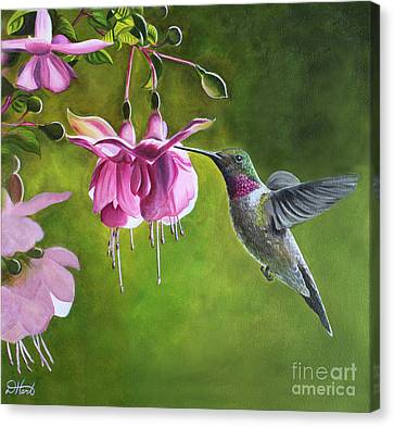 Canvas Print featuring the painting Hummingbird And Fuschia by Debbie Hart