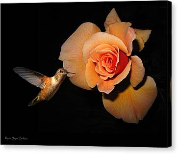 Hummingbird And Orange Rose Canvas Print