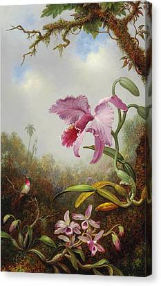 Hummingbird And Two Types Of Orchids Canvas Print by Martin Johnson Heade