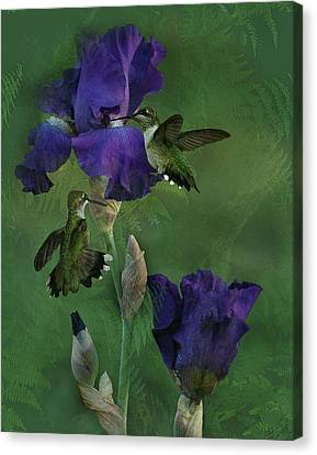 Hummingbird Gathering Canvas Print by TnBackroadsPhotos