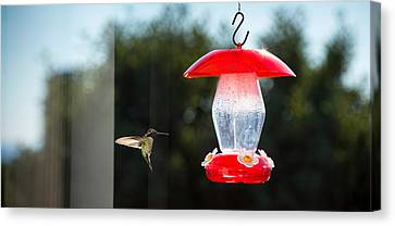 Hummingbird Hovering At Bird Feeder Canvas Print by Panoramic Images