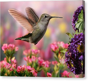 Hummingbird In Colorful Garden Canvas Print by William Lee